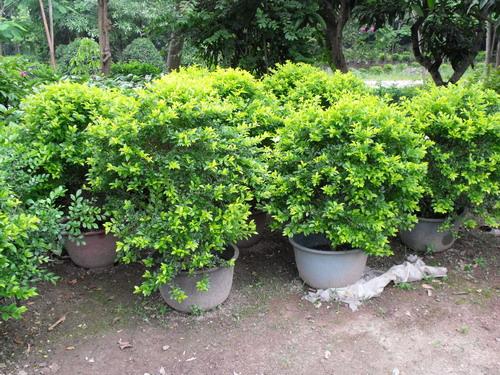 搜索关键词:  景观养护  园林绿化  景观设计  上一信息: 灌木类 下